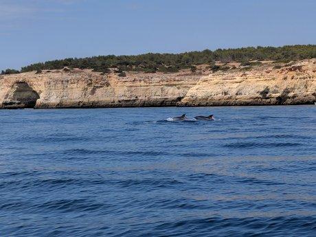 Dolphins Travel Hack Reward Points